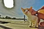 gato (2)