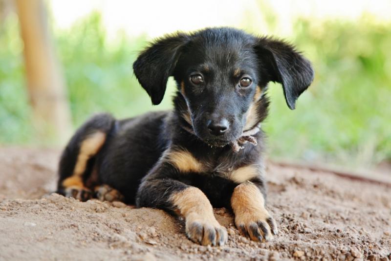 puppy (2)