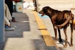 perros (4)
