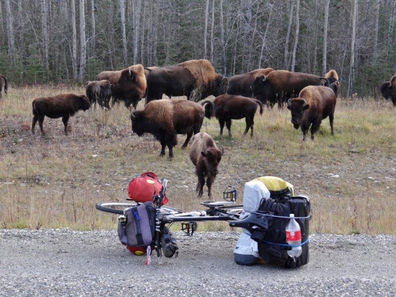 Alaska Highway (6)
