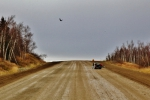 dalton highway (4)