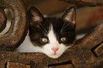 gatos w reten (10)