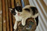 gatos w reten (2)
