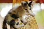 gatos w reten (3)