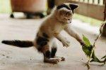 gatos w reten (4)