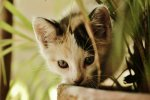 gatos w reten (8)