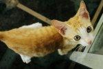 el gato (2)