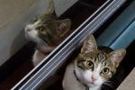gatos (2)