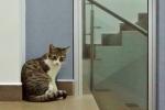 gatos (3)