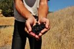 blackberry (2)