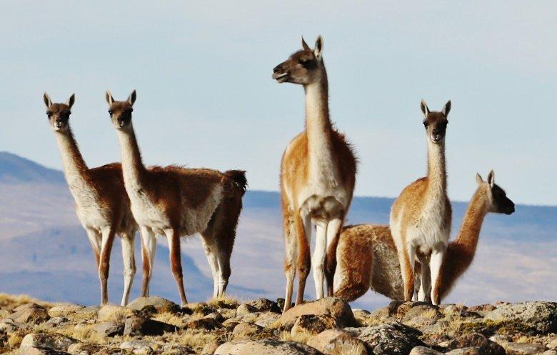 Patagonia (3)