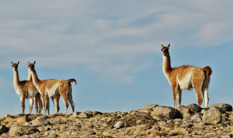 Patagonia (4)