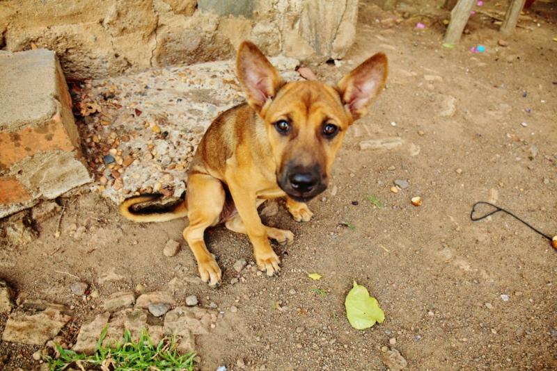 kambodża (2)