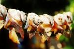 pescado (1)